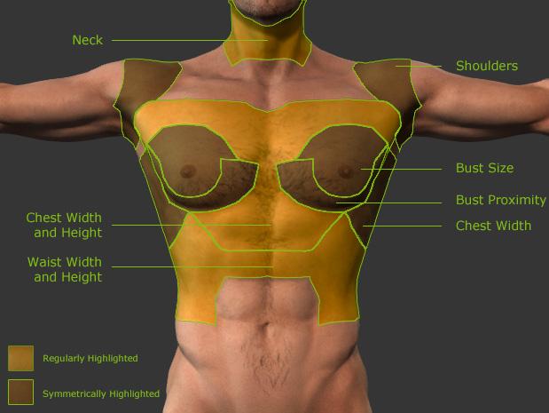 Body Part Morphing Anatomy